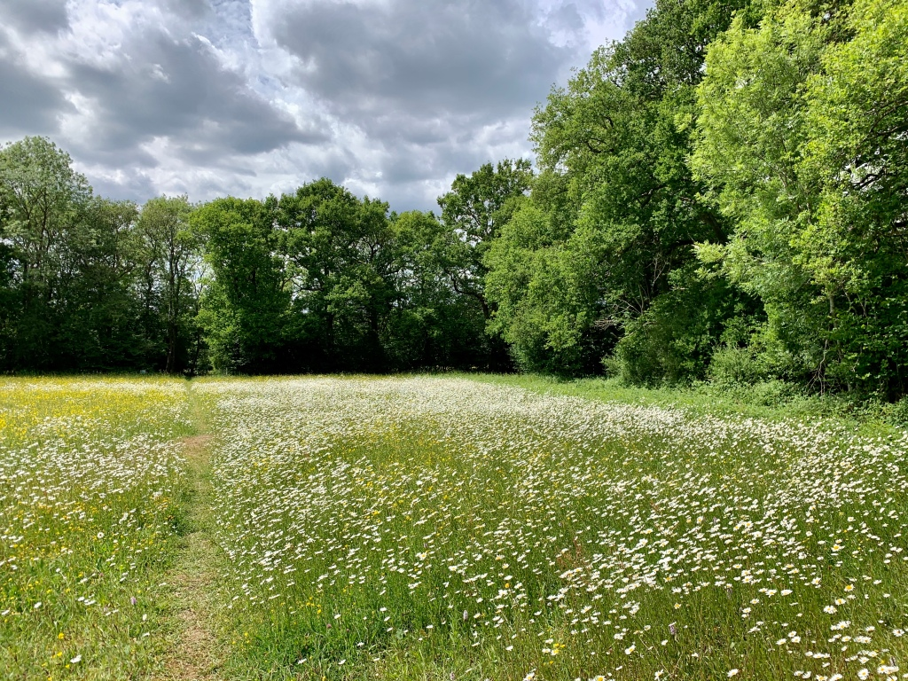 Loop from Penshurst via Chiddingstone via a meadow with wild flowers
